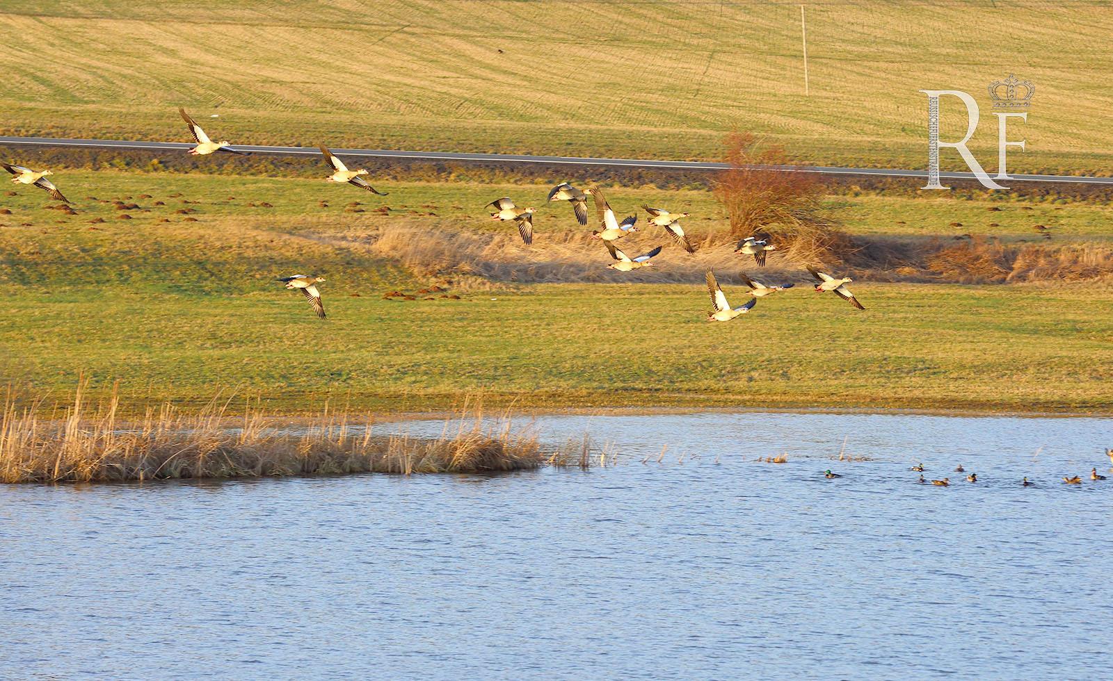 Naturschutzgebiet Frießnitzer See