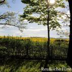 Burgruine Reichenfels