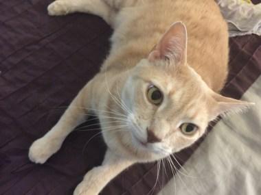 Peanut, our beloved cat