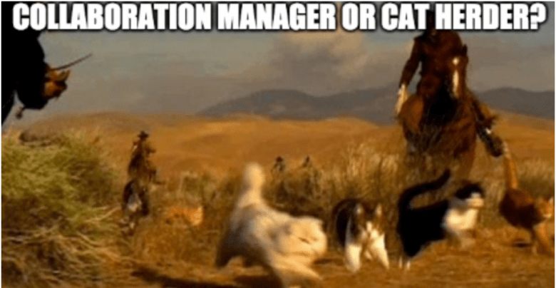 collaboration manager or cat herder?