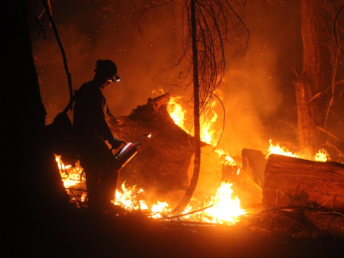 A firefighter in shadow stands against a burning tree.
