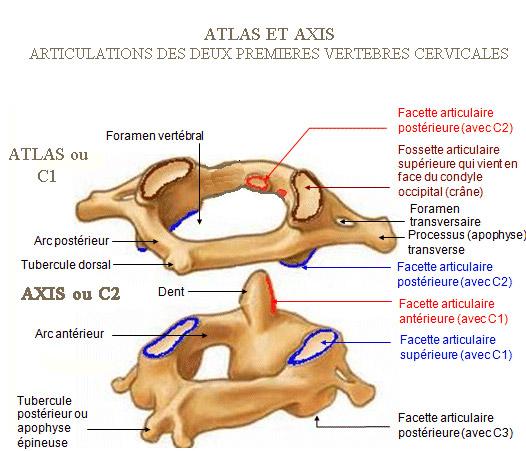 """Résultat de recherche d'images pour """"axis atlas"""""""