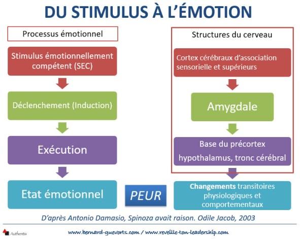Le parcours du stimulus à l'émotion