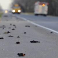 Dead Birds Will Fall in the Last Days?