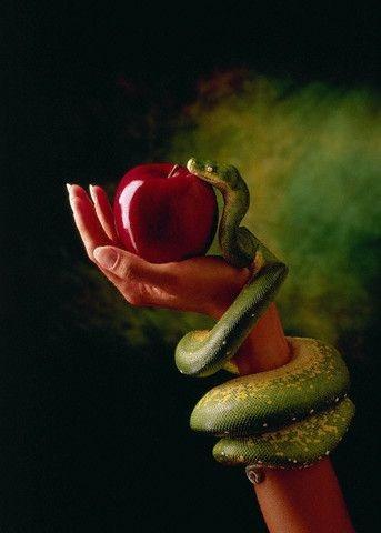 Image result for fruit in garden of eden