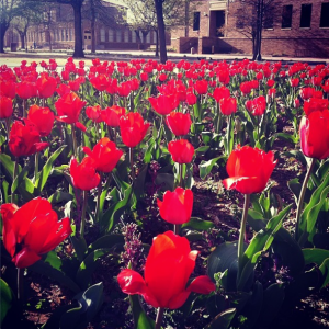 Texas Tech is absolutely gorgeous in the spring.