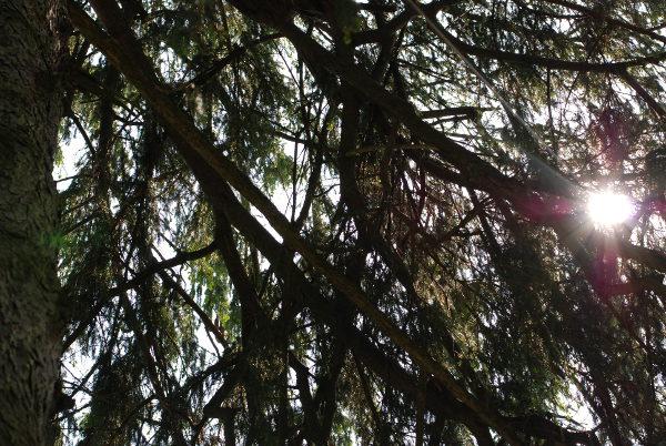 evergreen #3