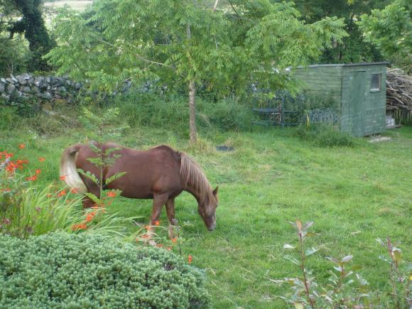 https://i2.wp.com/reverence-sateenkaari.cowblog.fr/images/P1220366.jpg