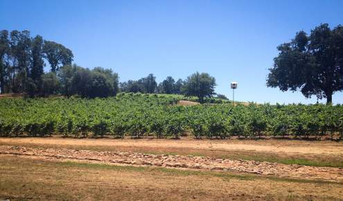 Location of the festival: Terra d'Oro/Montevina Winery