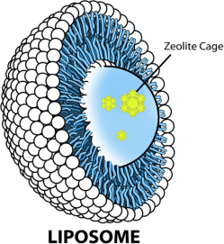 liposome-cytodetox-610x663