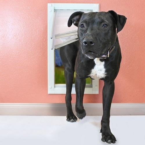 Best Dog Doors Reviews 2018