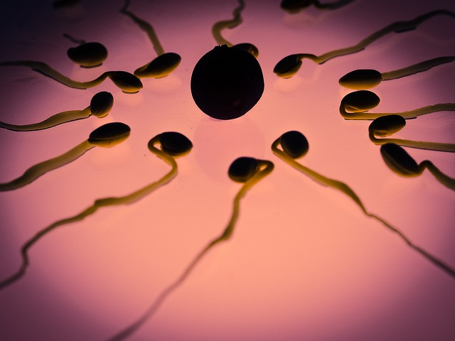 Foods that Increase Fertility in Males