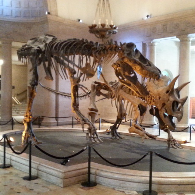 Dinosaur fossil installation in the entryway to The Los Angeles Museum Of Natural History. Photo by ReviewerPhoto.com.