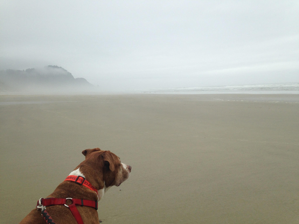 """Nowhere beach Oregon, with my dog Roxie."" ~SAS"