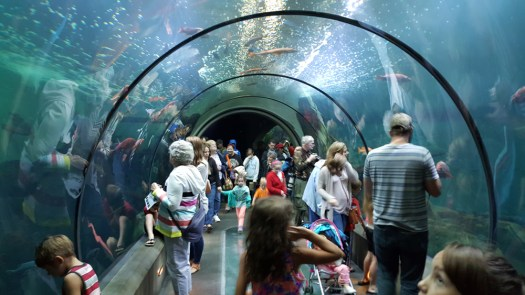 """Photo above, of the underwater tube exhibit at The Oregon Aquarium called """"Passages of the Deep"""" that used to be in Keiko's the whale's tank, by the author SAS."""