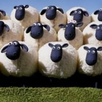 Top 5 tinh chất nhau thai cừu tốt nhất hiện nay