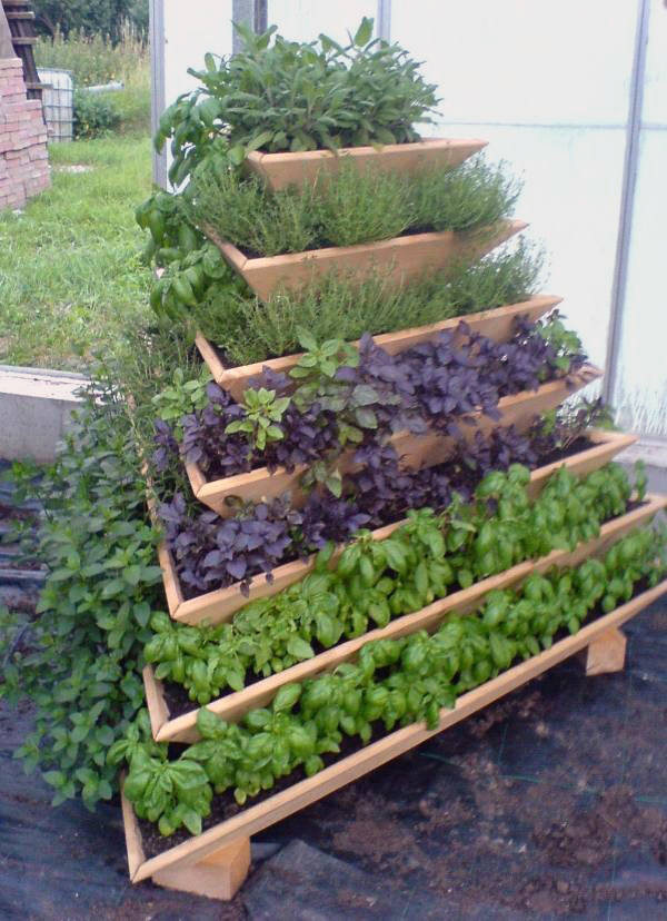 Vertical Gardening: Grow More in Less Space & in Less Time 7