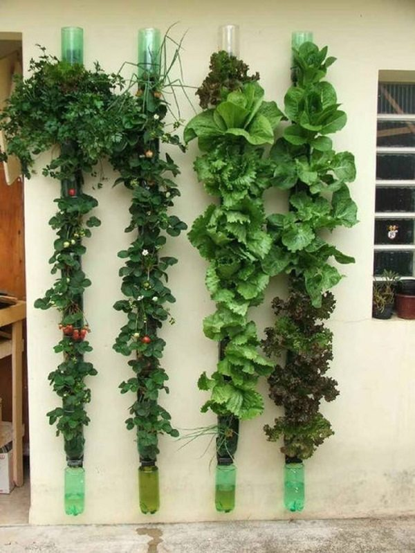 Vertical Gardening: Grow More in Less Space & in Less Time 6