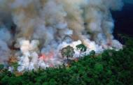 The Amazon is BURNING and Everyone Needs to Know
