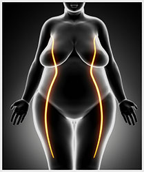 Fat Shrinking Signal - Belly Fat