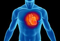 Okinawa Flat Belly Tonic - Heart