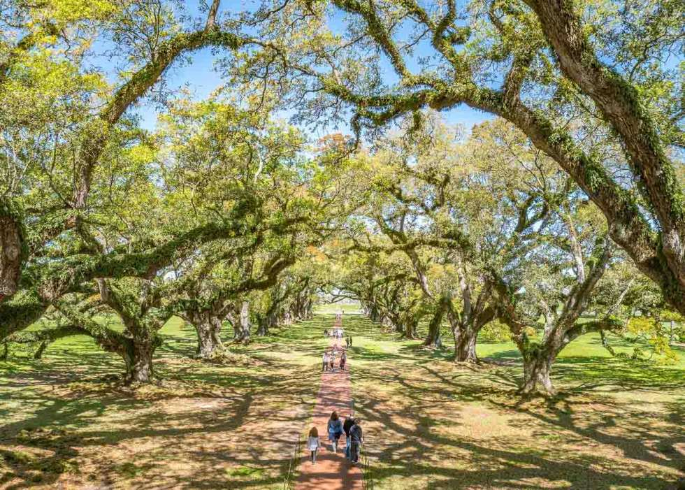 oak alley plantation vacherie new orleans louisiana