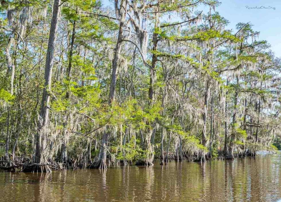 torres cajun swamp tour