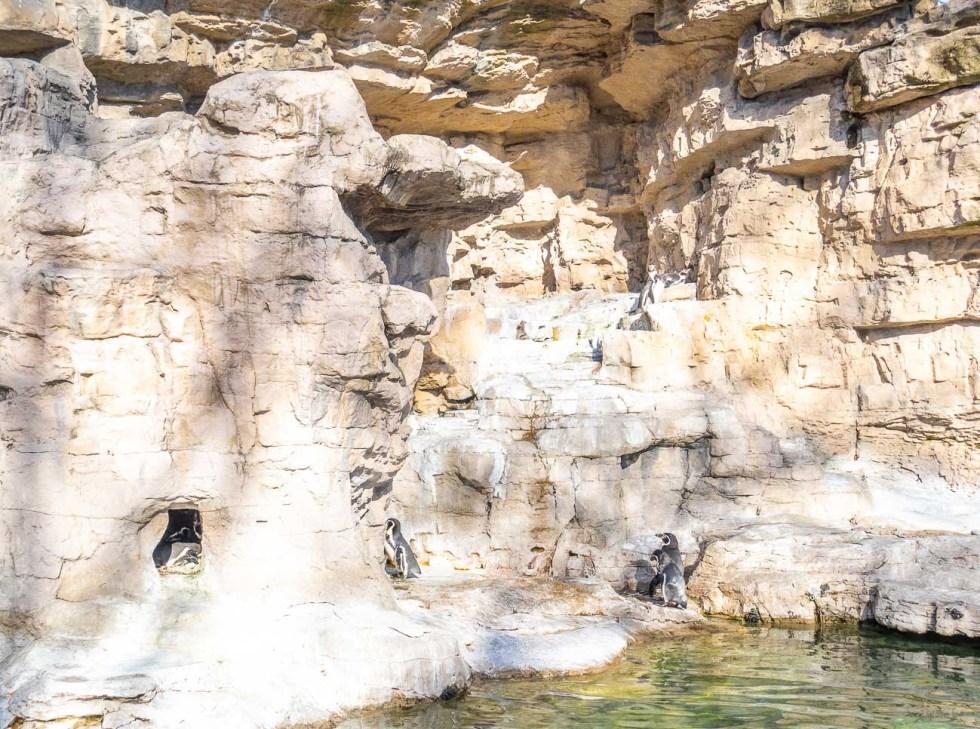 st louis missouri zoo penguins