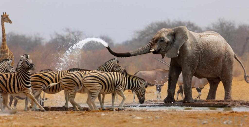 Top Tourist Attractions In Namibia Worth Your Time & Stay