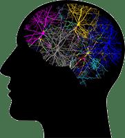 Synapse Xt - Brain