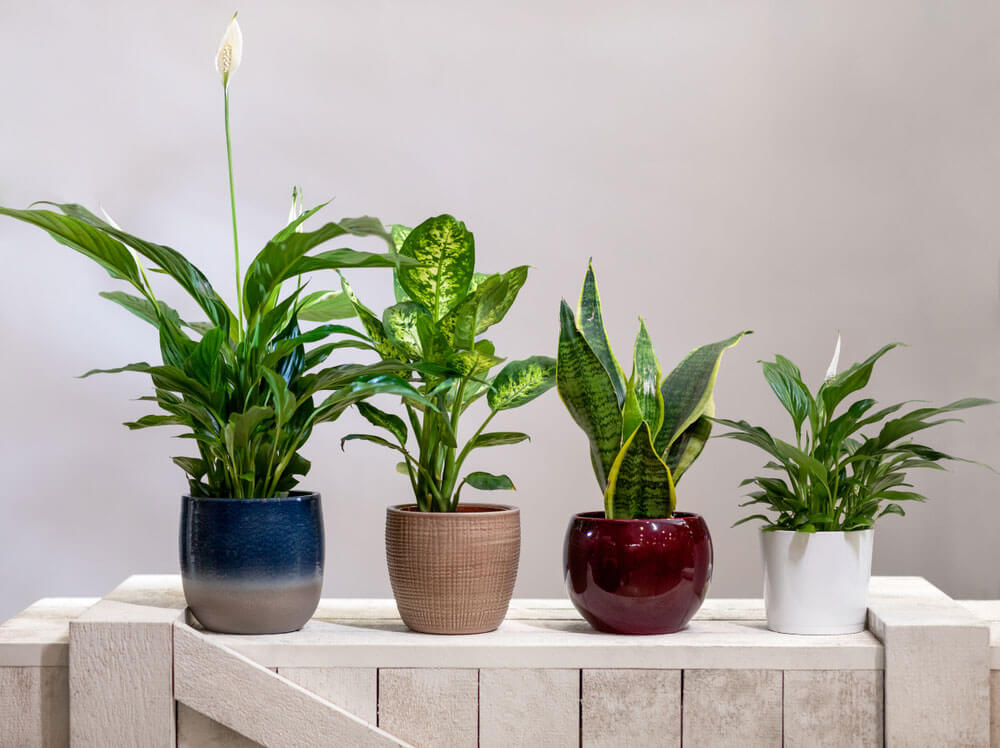 best air purifying plants which remove