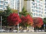 Autumn in Daegu