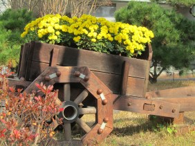 Spring, daegu 2012