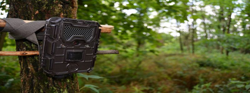 Why Do We Need A Trail Camera? Complete Description