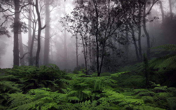 Convectional Rainfall commonly occurs in rainforests. Image by Wallpaperlepi