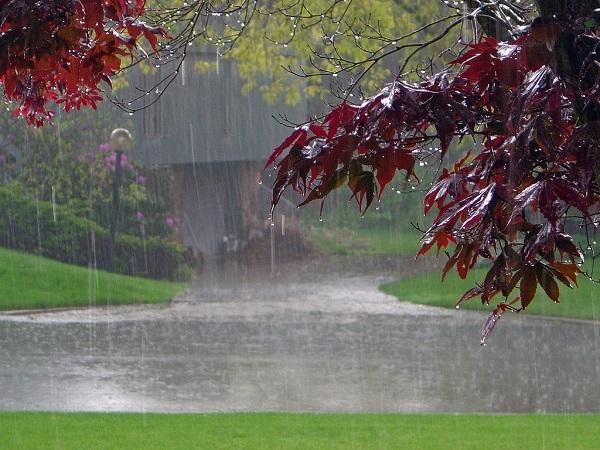 Rainy Weather. Image by Sodahead.