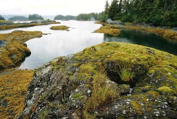 Organic weathering. Image credit Purolite.com