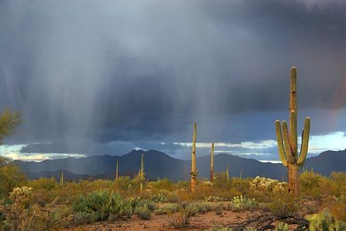 Rain falling in a desert. Image credit Snipview.