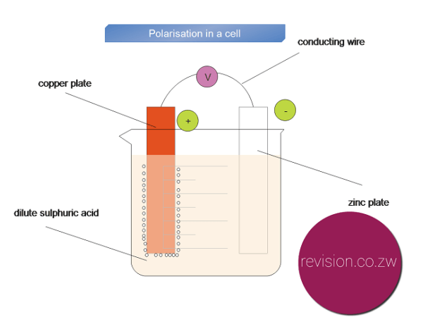 Polarisation in a simple cell