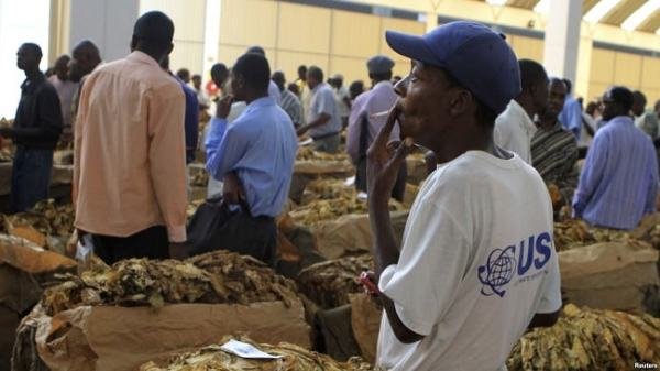 A man smoking and selling Tobacco at an Auction floor. Image credit voanews.com