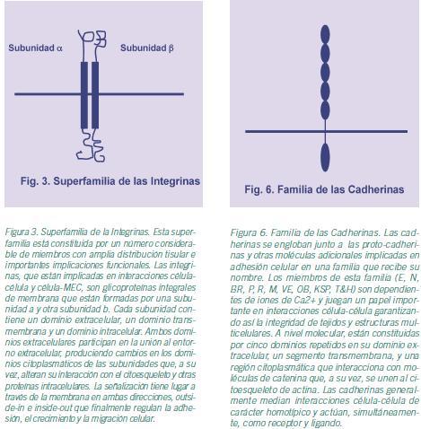 Revista jun2007 Art. 41-50 Figura 3 y Figura 6