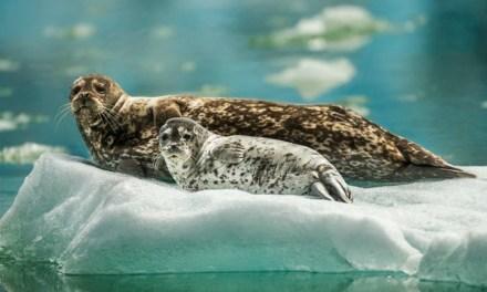 5 destinos muy chic para ver glaciares