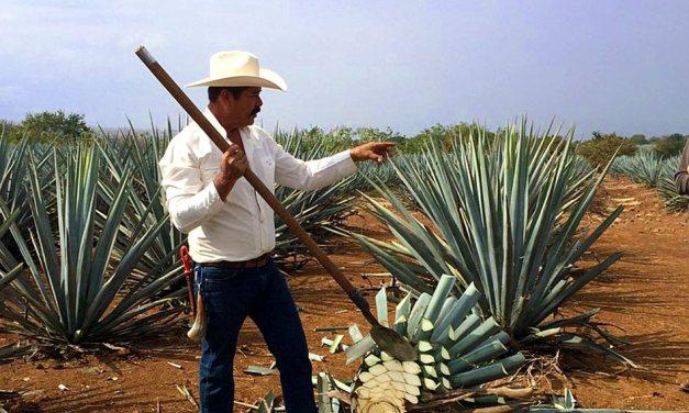 Las denominaciones de origen de México