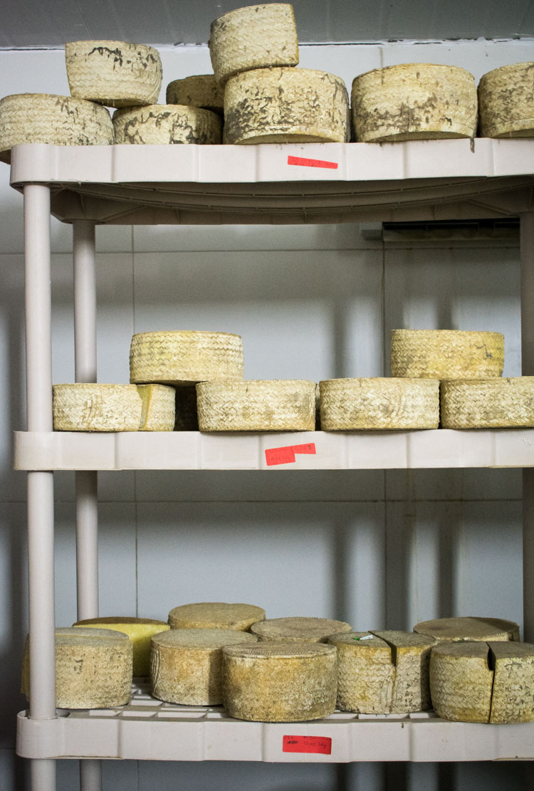 Quesos casa de piedra, quesos mexicanos de leche de oveja   Revista Maria Orsini