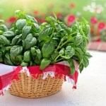 La Albahaca – Herbario
