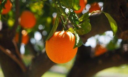 La naranja, fruta de sol