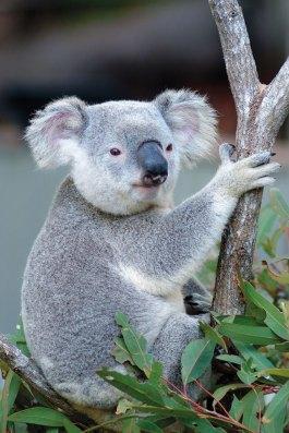 El-sueño-australiano9
