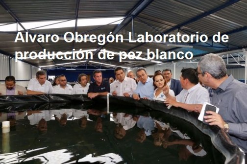 laboratorio Pez Blanco - Copy