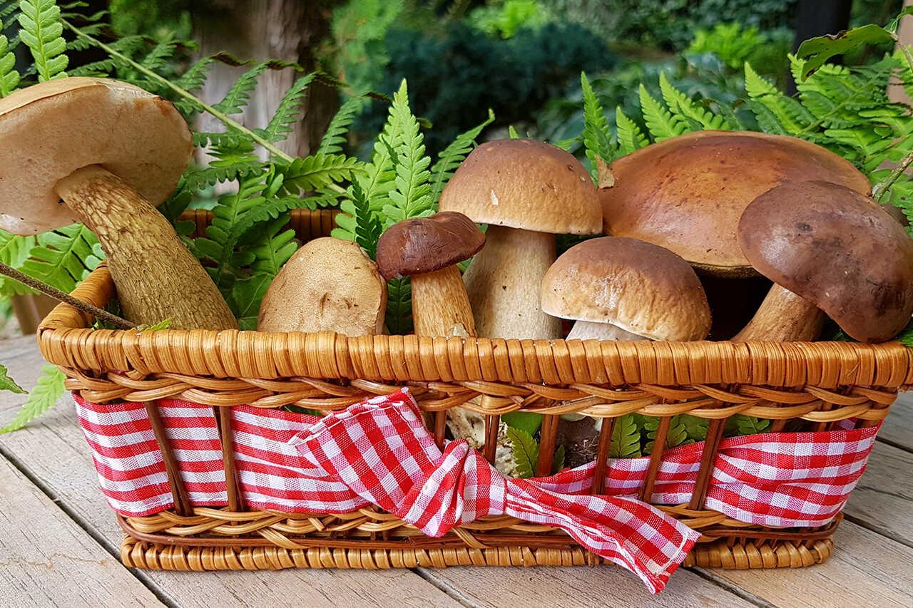 Ciuperci à la grec