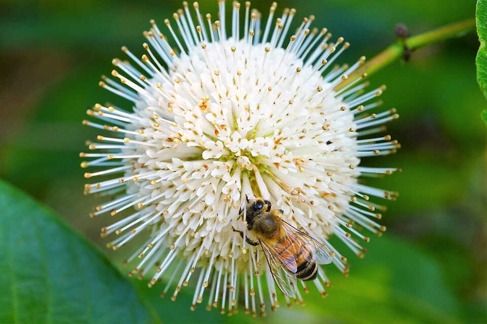 Mierea, care sunt beneficiile sale pentru pielea noastră?